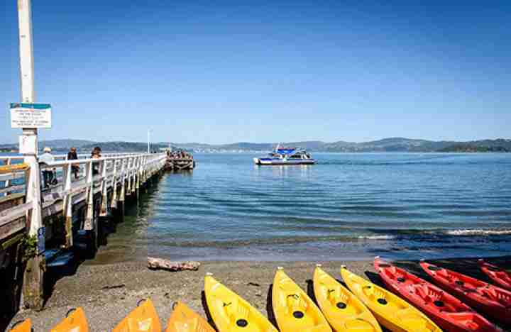 Days Bay Boatshed kayaks with ferry in the background