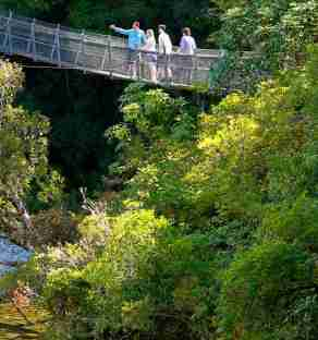 kaitoke regional park swingbridge walkers on bridge