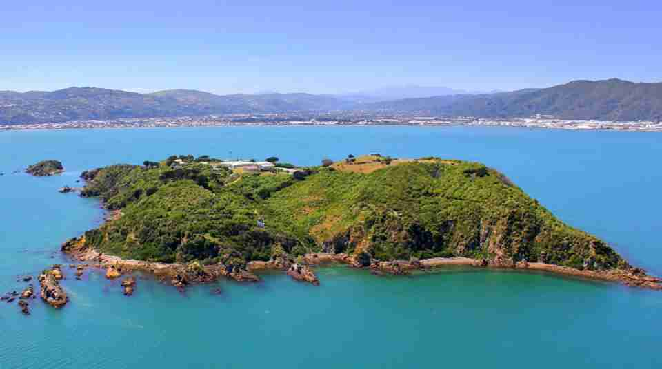 matiu somes island aerial view of island in middle of harbour